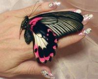 Почему эффект бабочки так называется