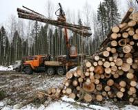 Под Златоустом нарушители вырубили сосны на 3,5 миллиона рублей