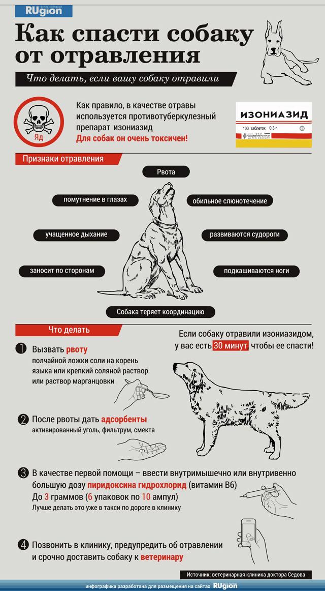 Усыпить собаку в домашних условиях самому препараты